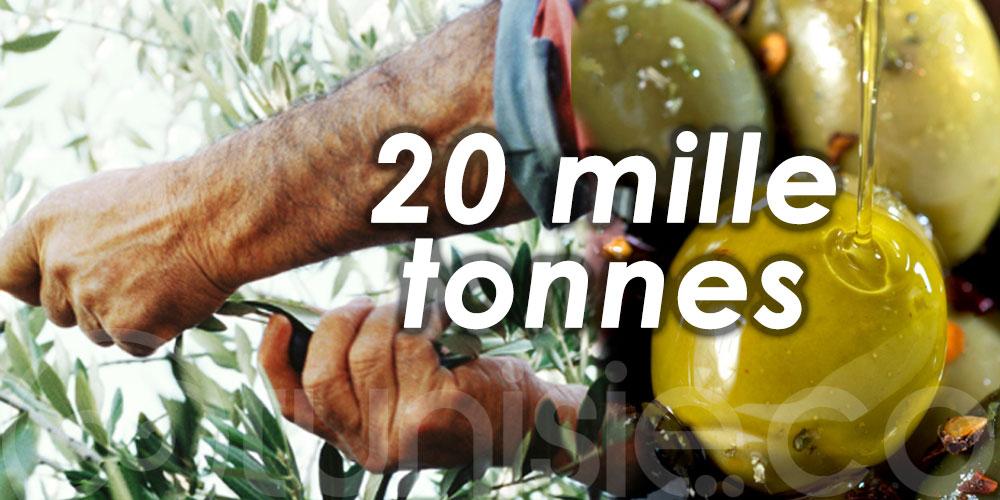 La récolte d'olives estimée à 20 mille tonnes à Siliana