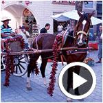 En vidéo : Ambiance festive lors de l'inauguration de la Fête de l'Harissa et du Piment