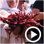 En vidéo : Ambiance pimentée lors de la Harissa Tour