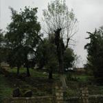 En photos : Aïn Draham, un petit coin de paradis oublié