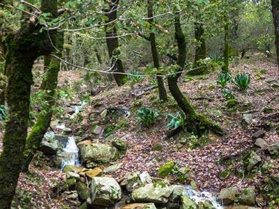 En photos : Ain Draham paysage naturel exceptionnel depuis Djebel El Bir L'ahzem