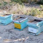 Sortie découverte apiculture, avec un programme pour les enfants
