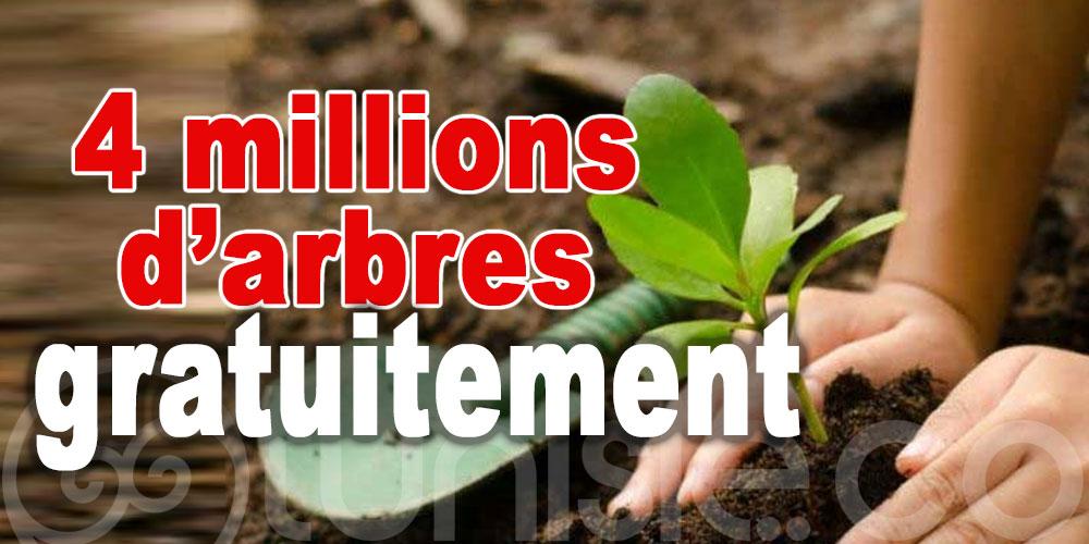 Fête de l'arbre : Des plants gratuits pour reboiser la Tunisie