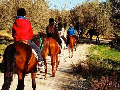 Balade à cheval et visite culturelle à Utique le 19 Novembre