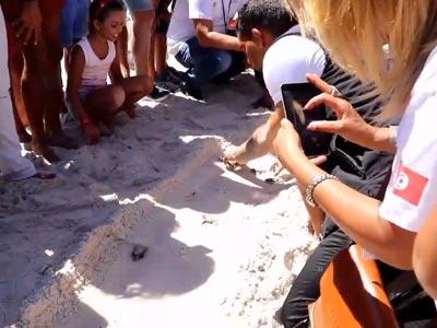En vidéos : Kelibia, des bébés tortues percent leur coquille et rejoignent la mer!