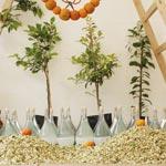 En photos : Ambiance de la 1ère édition de la fête des fleurs de bigaradier à Nabeul