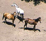 Parc national de Bouhedma