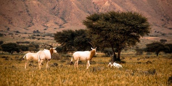 En photos : Le Parc national de Bouhedma, pour un air de savane africaine