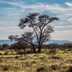 En photos : Le Parc national de Bouhedma, pour un air de savane africaine