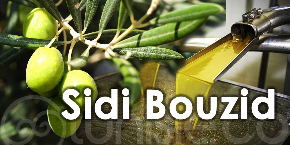 La production d'olive dépassera 150 mille tonnes à Sidi Bouzid