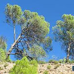 Parc national Châambi