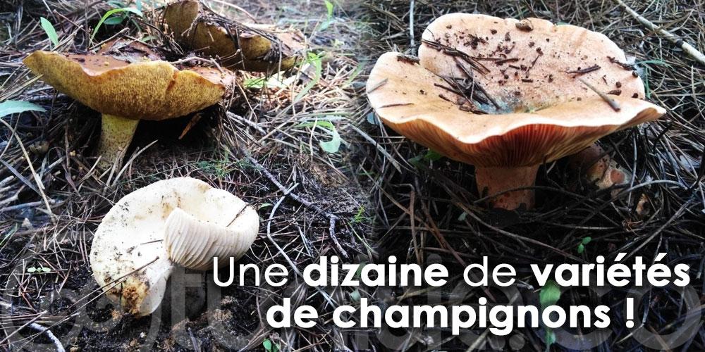 En photos: Voici venu le temps pour ramasser des champignons