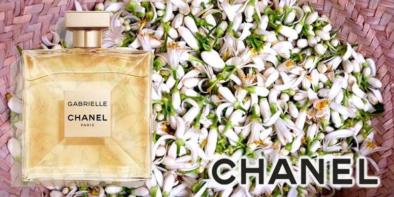 La fleur d'oranger de Tunisie essence du nouveau parfum Chanel