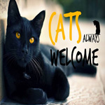 Le Chat Noir, le nouveau café pet friendly