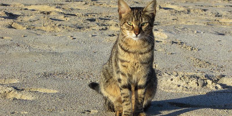 En photo, un restaurant pour chats à Djerba ?!