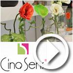 En vidéo : Inauguration de la première boutique CINQ SENS à Tunis
