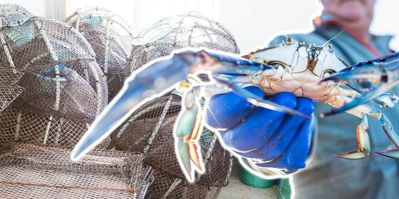 150 nasses à crabe bleu offertes pour les pêcheurs de la lagune de Ghar El Melh