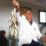 Houmet Souk : Dallel el Hout ou la vente à la criée