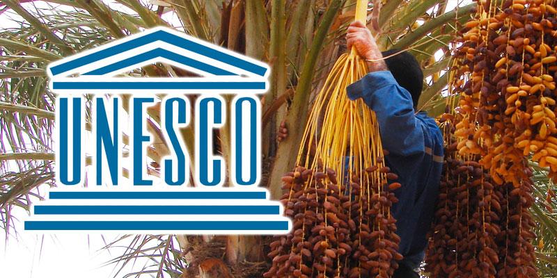 Le palmier dattier, symbole des civilisations inscrit à l'UNESCO