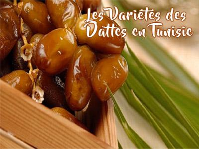 Connaissez-vous les types de dattes en Tunisie ?