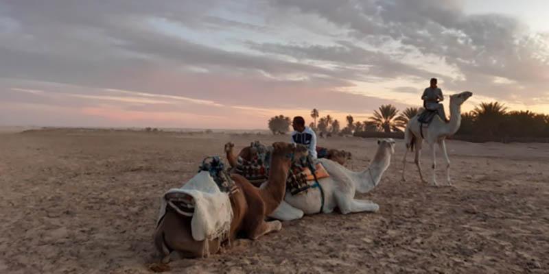 Tourmag : La Tunisie une destination de soleil d'hiver à redécouvrir