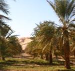 Projet de promotion du tourisme écologique et désertique