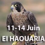 La 48ème édition du Festival de l'Épervier d'El Haouaria se déroulera du 11 au 14 juin 2015