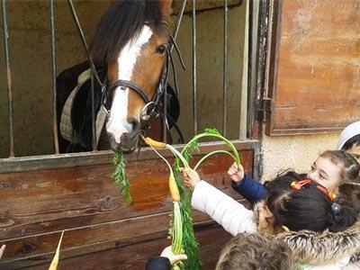 En photos : 10 centres équestres à découvrir sur le Grand Tunis