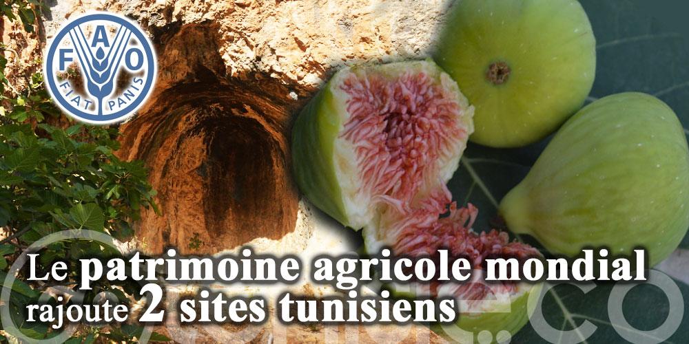 Le patrimoine agricole mondial rajoute deux sites tunisiens