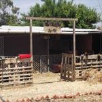 Découvrez la nature autrement avec 'Ma Petite Ferme', une ferme pédagogique située à Grombalia