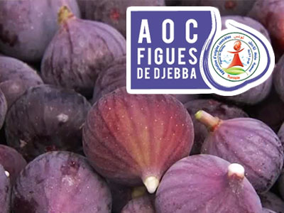 Campagne Nationale des Figues de Djebba AOC