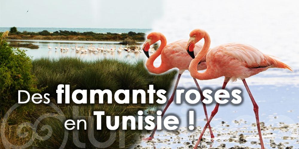 En photos: Voici venu le temps de voir des flamants roses en Tunisie