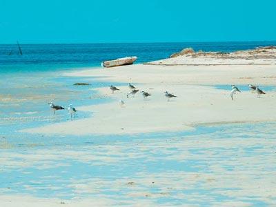 En Photos : L'île aux Flamants roses une destination pour prolonger les vacances en septembre