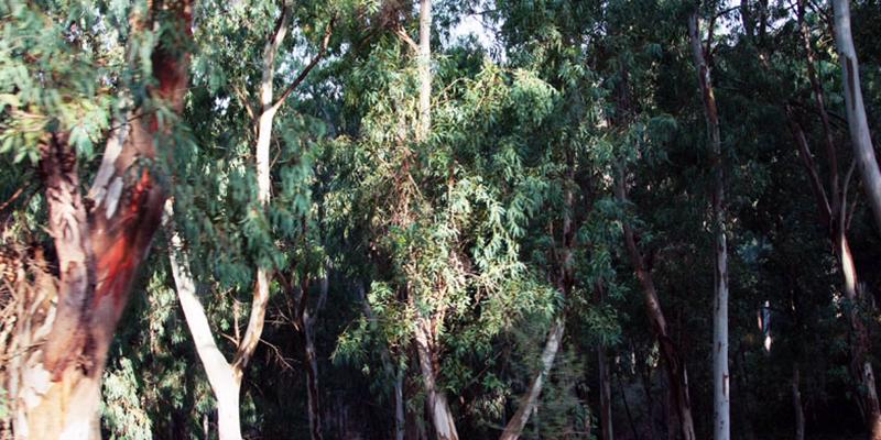 Développement des communes forestières du Nord-ouest, objet d'un séminaire