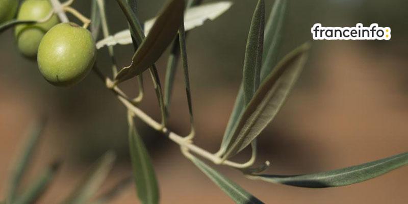 Les produits bio des Moulins Mahjoub, dans le monde entier