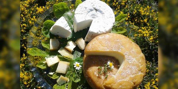 En photos : Les 10 fromageries artisanales coup de cœur de Tunisie.co
