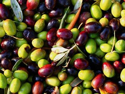 Augmentation impressionnante dans la production des olives, grenades et dattes à Gabès