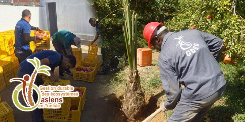 Gestion Durable des Ecosystèmes Oasiens : Une amélioration de la production agricole