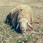 Statuquo : ou le regard de Hamideddine Bouali sur l'expo Postcards From Tunisia