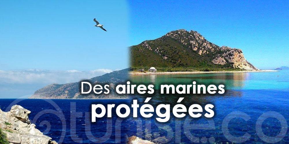 Zembra, Zembretta, Kuriat, Kneiss et la Galite bientôt des aires marines protégées