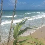 En photos : Défier les vagues, l'un de sports préférés à Ras Jebel
