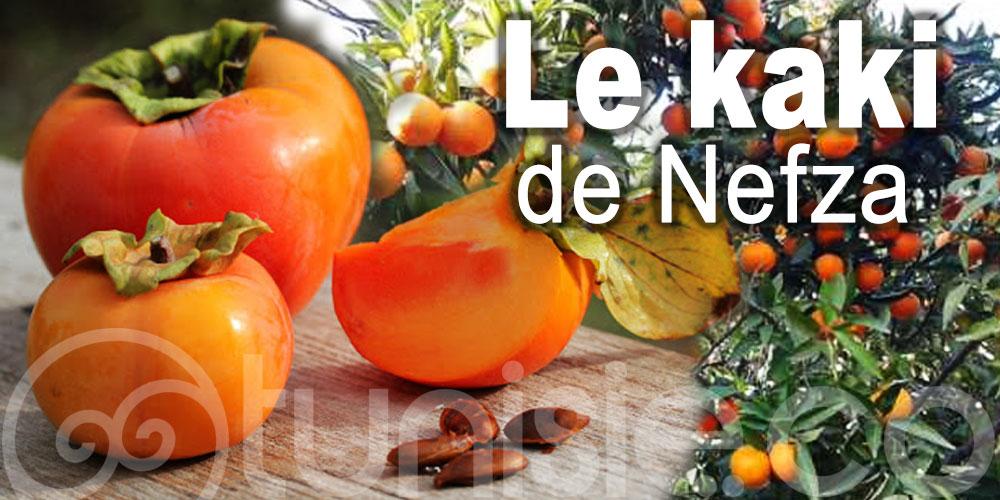 Le kaki, fruit fétiche de la région de Nefza