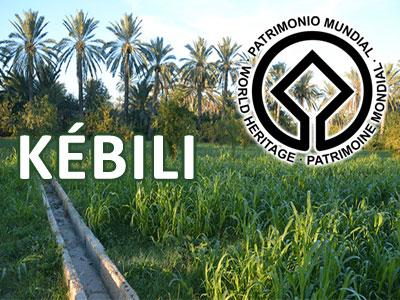 Us et coutumes liés au palmier de Kébili sur la liste du patrimoine de l'Unesco