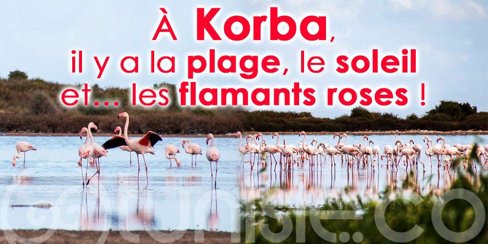 À  Korba, il y a la plage, le soleil et… les flamants roses !