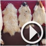 La seconde vie des moutons dans l'artisanat authentique