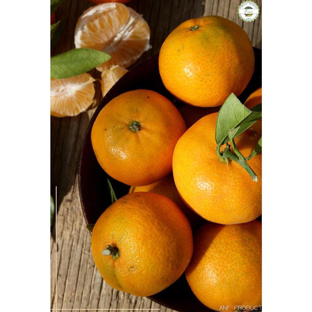 mandarinef-011220-01.jpg