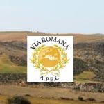 Randonnée : Miel et huile d'olive sur la voie romaine dimanche 3 mars 2013
