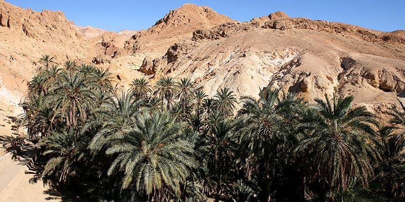 Les oasis de montagne de Tozeur bientôt labellisées Bio