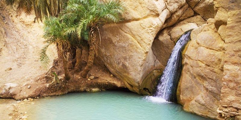 Après des années de sécheresse, la source d'eau de la vieille oasis de Tozeur reprend vie
