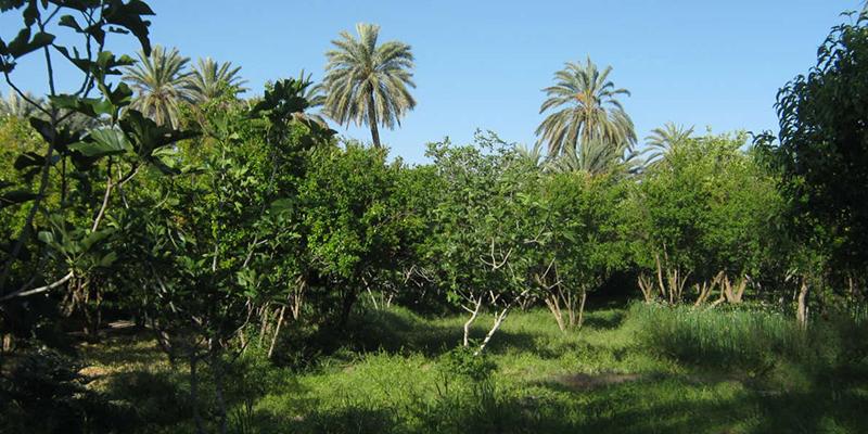 Zoom sur le projet Compost commun dans l'oasis de Gafsa